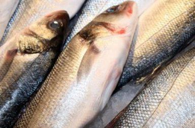 Maj iztochi chujd iazovir I zadigna nad polvin ton riba